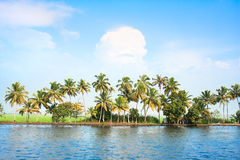 Coconut tress along the backwaters , India. Royalty Free Stock Photo