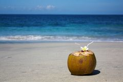 Coconut on tropical beach Royalty Free Stock Image