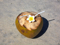 Coconut on tropical beach. With plumeria Royalty Free Stock Images