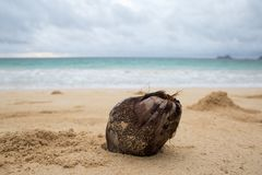 A coconut on a tropical beach. A coconut sits in the sand on a warm tropical beach.  Concept for vacation or travel to warm locations Stock Photo