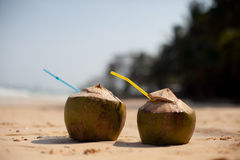 Coconut on tropical beach Royalty Free Stock Photo
