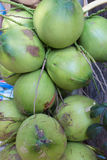 Coconut tropical fruit Royalty Free Stock Images