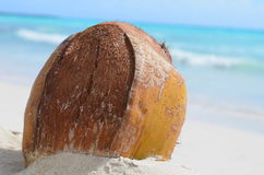 Coconut. A tropical coconut laying at the beach Royalty Free Stock Photo