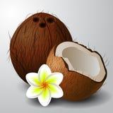 Coconut tropical nut fruit Stock Photo