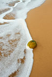 Coconut on tropical ocean beach. Coconut washed onto a tropical ocean beach Royalty Free Stock Photos