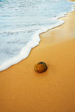 Coconut on tropical ocean beach. Coconut washed onto a tropical ocean beach Stock Photography