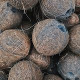 Coconut is a tropical treat. royalty free stock photography