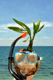 Coconut on tropical vacation Stock Images