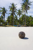 Coconut On A Tropical White Sand Beach. Nature Background With Coconut On A Tropical White Sand Beach in Panglao, Bohol, Philippines. Holiday and Travel Symbol Stock Photo