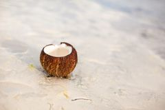 Coconut on tropical white sand beach in a sunny Royalty Free Stock Photography