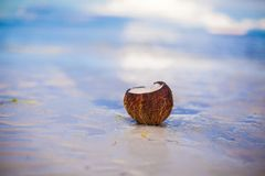 Coconut on tropical white sand beach in a sunny Royalty Free Stock Images