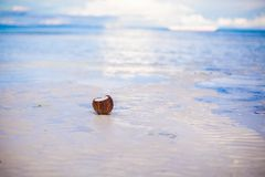 Coconut on tropical white sand beach in a sunny Stock Photo