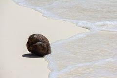 Coconut on tropical white sand beach in a sunny Stock Photography