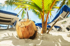 Coconut with two straws on a beach Royalty Free Stock Images