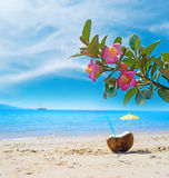 Coconut under pink flowers by the sea Stock Photography