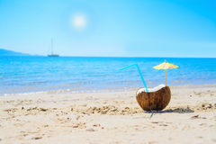 Coconut under the sun Stock Photography