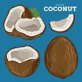 Coconut , Vector. Stock Photo