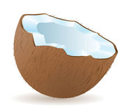 Coconut vector illustration Stock Images