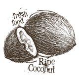 Coconut vector logo design template. fresh food or Stock Photo