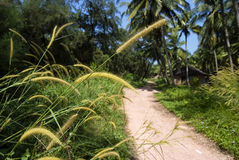 Coconut village. Large grass near rosd in coconut village, focus on gass Royalty Free Stock Photography