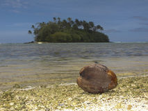 Coconut washed up on beach. Royalty Free Stock Image