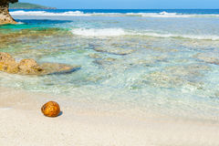 Coconut washed up on small  tropical beach Royalty Free Stock Images