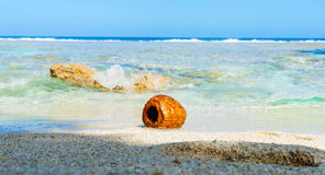 Coconut washed up on small  tropical beach Royalty Free Stock Photos
