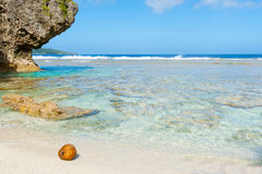 Coconut washed up on small  tropical beach Royalty Free Stock Photo