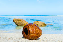 Coconut washed up on small  tropical beach Stock Photography
