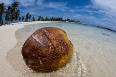 Coconut, Beach and Remote Island in Caribbean Sea Stock Photos