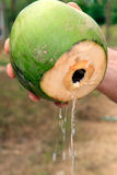 Coconut Water being Poured from the Fresh Fruit Stock Photos