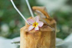 Coconut water Royalty Free Stock Photos