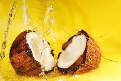Coconut with  water splash Stock Photos