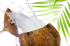 Coconut wave Royalty Free Stock Photo