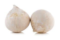 Coconut on white background Stock Photos
