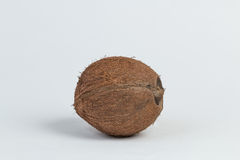 Coconut. A coconut on a white background Stock Image