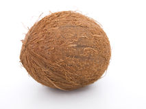 Coconut on a white background Stock Photos