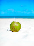 Coconut on white beach sand  near ocean Royalty Free Stock Images