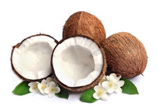 Coconut with white flowers Stock Image