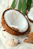 Coconut on the white sand beach Royalty Free Stock Image