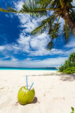 Coconut on white sand beach Royalty Free Stock Images