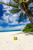 Coconut on white sand beach Stock Photo