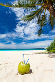 Coconut on white sand beach Stock Images