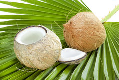 Coconut. Stock Photos