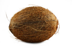 Coconut Royalty Free Stock Images