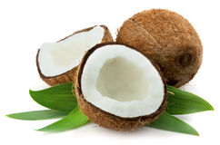 Free Coconut With Leaves Stock Photo - 19156490