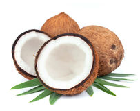 Free Coconut With Leaves Stock Photos - 26333443