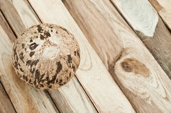 Coconut  on wood Stock Images
