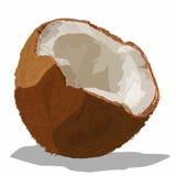 Coconute Stock Photos