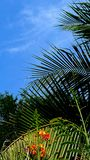 Coconutleaves Lizenzfreie Stockbilder